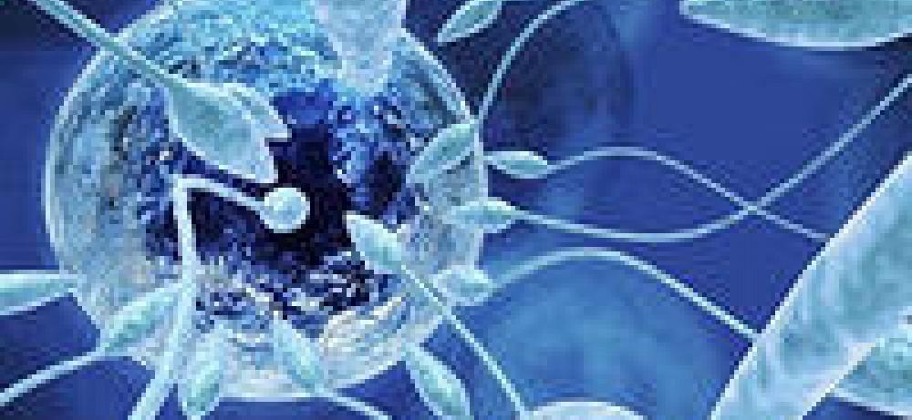 Перспективы зачатия зависят от возраста доноров спермы...