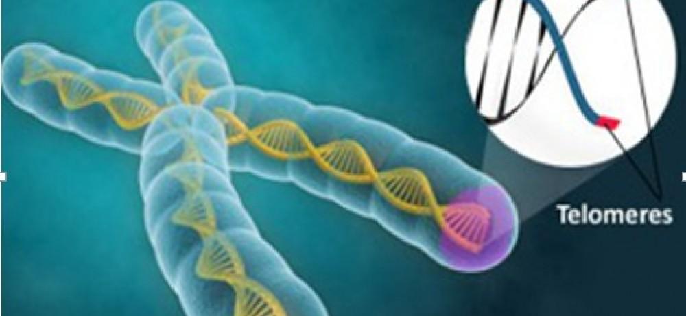 Влияние андрогенной депривационной терапии на длину теломер...