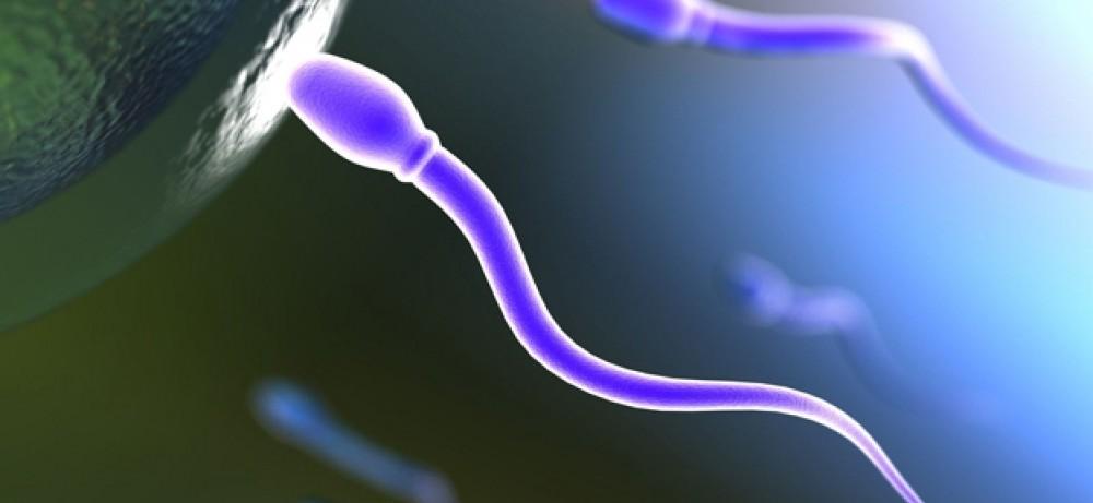 skorost-peredvizheniya-spermatozoidov