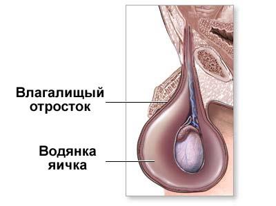 Болит левое яичко секс