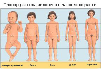 Норма роста и веса для подростков