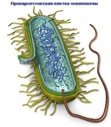 Микоплазменная инфекция | Мой уролог