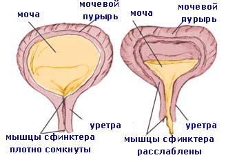 Член давит на мочевой