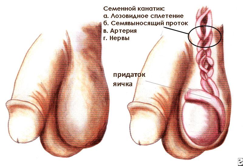 zastoy-v-zhenskih-organah-otsutstvie-seksa